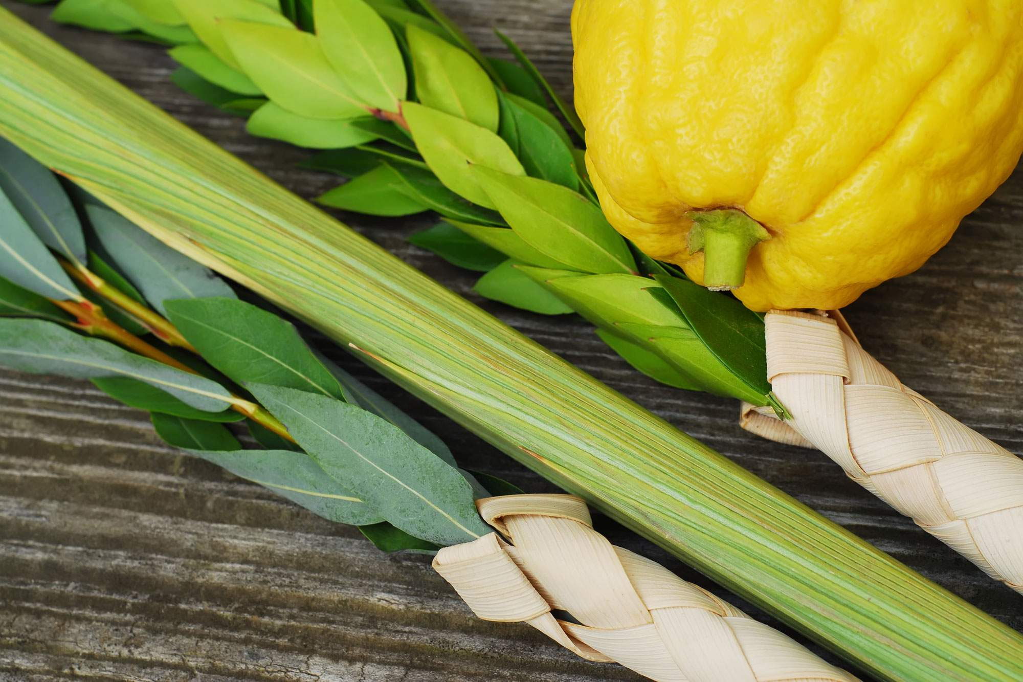 Order a Lulav and Etrog for Sukkot